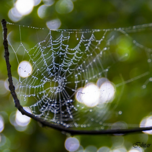 "Spiderweb • <a style=""font-size:0.8em;"" href=""http://www.flickr.com/photos/132080213@N08/25823958280/"" target=""_blank"">View on Flickr</a>"