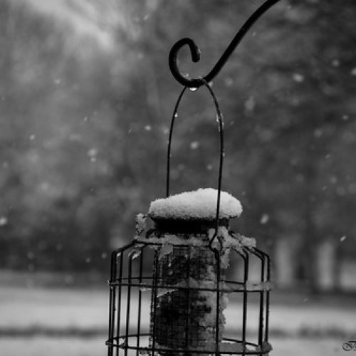 """Gotas de nieve • <a style=""""font-size:0.8em;"""" href=""""http://www.flickr.com/photos/132080213@N08/26007161872/"""" target=""""_blank"""">View on Flickr</a>"""